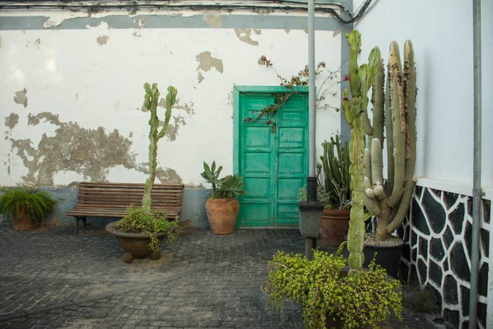 arrecife kaktusar