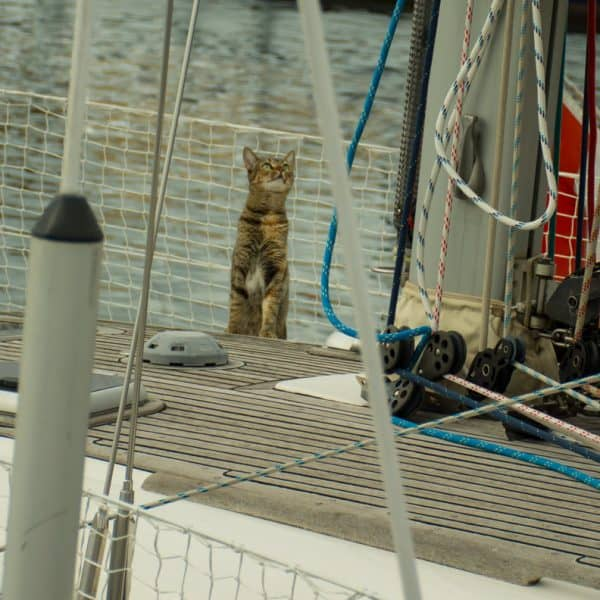 katt på båt